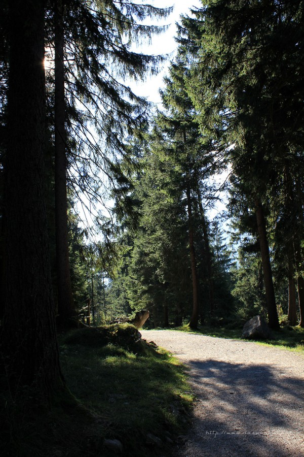 Farchant - Waldlehrpfad Entdeckungen 23