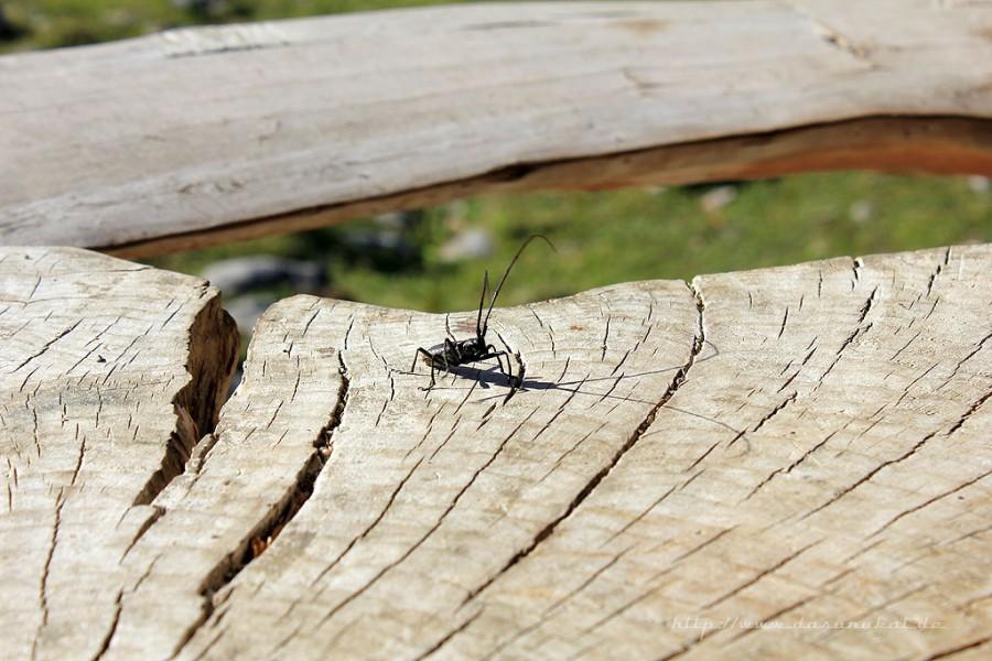 Farchant - Waldlehrpfad Entdeckungen 25 Insektenangriff