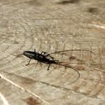 Farchant - Waldlehrpfad Entdeckungen 26 Insektenangriff
