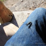 Farchant - Waldlehrpfad Entdeckungen 27 Insektenangriff